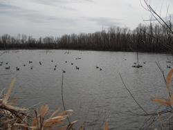Click to view album: 2012 Waterfowl Hunt